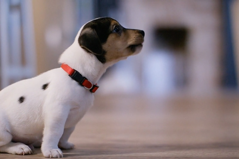 does indoor air quality affect my pet?